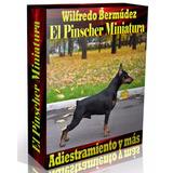 Libro Electrónico El Pinscher Miniatura Adiestramiento Y Más