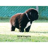 Cachorros Terranovas New Earth