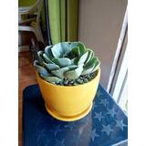 Plantas Ornamentales De Todo Tipo, Cactus, Suculentas,
