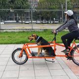 Bicicleta De Carga Frontal Tipo Long Johns